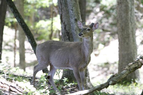 Lone Elk April 2012