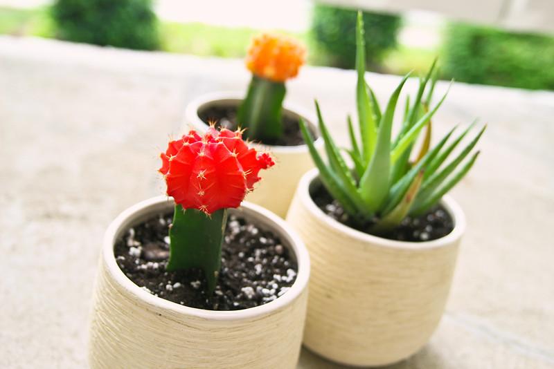 05/11 - Cacti