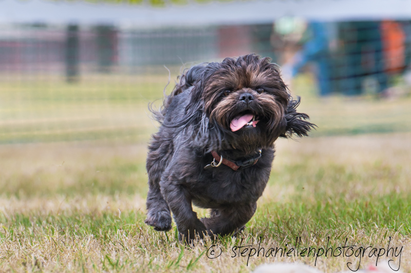 Woofstock_carrollwood_tampa_2018_stephaniellen_photography_MG_8751.jpg