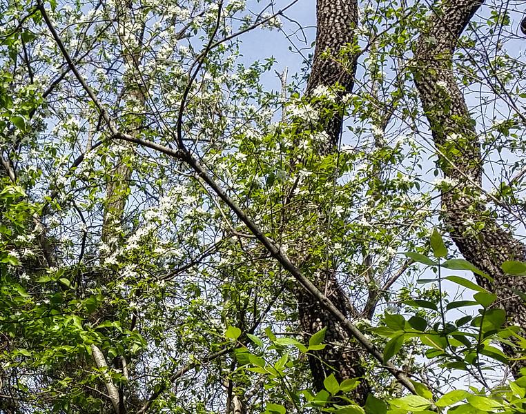 6.3.4>NorthForestGully.TheGulch>Pair white flowers mystery
