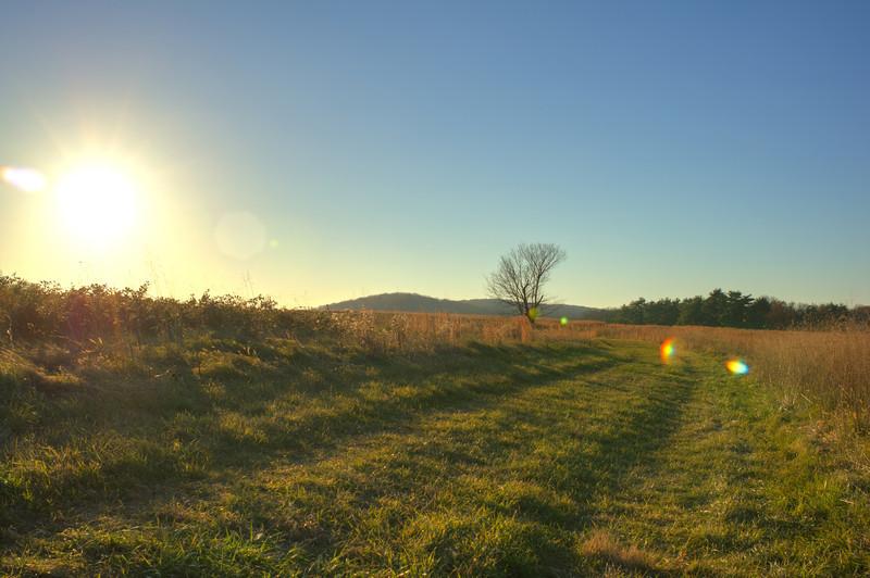 VFNP tree landscape HDR.jpg