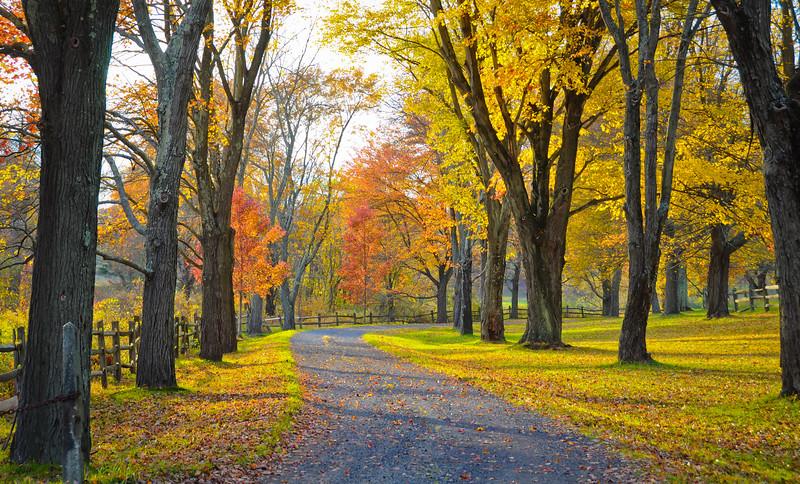 Fall leaves lane