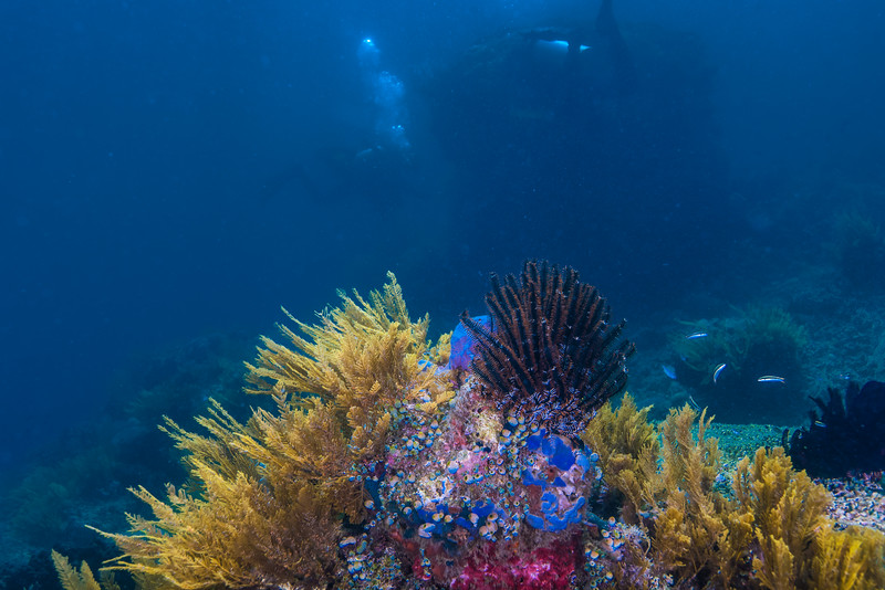Taken at Kota Janji 1 divesite in Ternate Island, North Maluku, Indonesia during our 8D7N excursion in March 2018