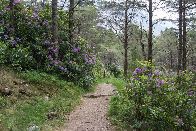 The trail was finally soft again.
