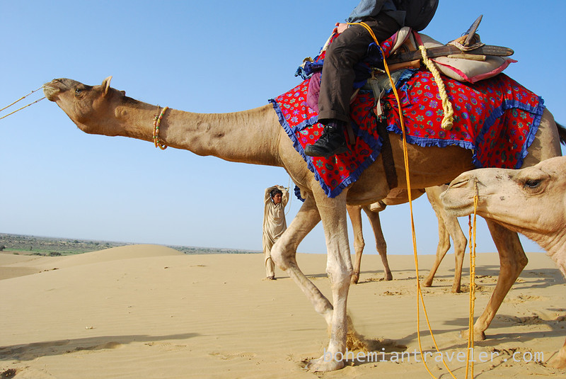 on a Rajasthan Camel Safari (3).jpg