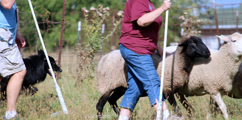 2015.9.27 Herding at Bonnies (49).JPG