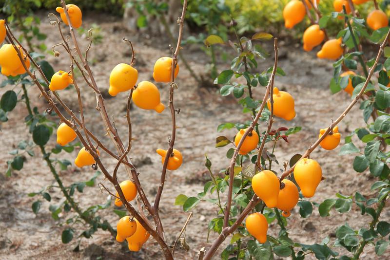 weird fruit