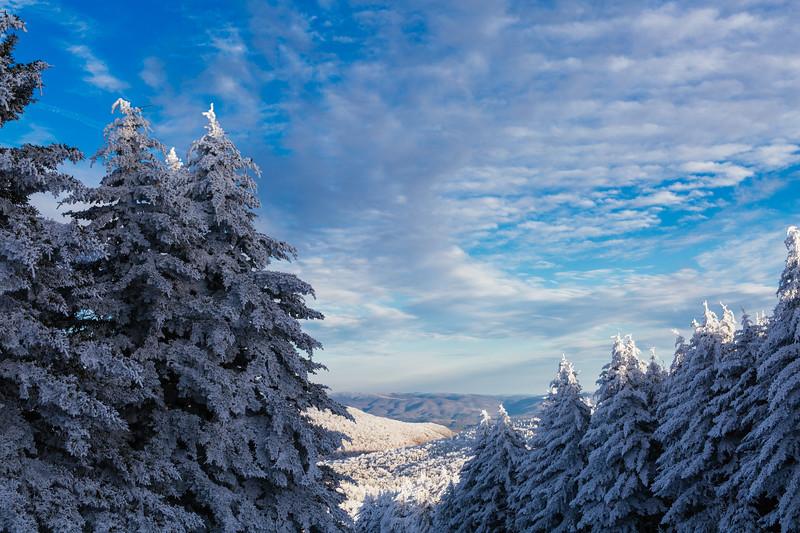2020-02-01_SN_KS_Frosty Trees-0673.jpg