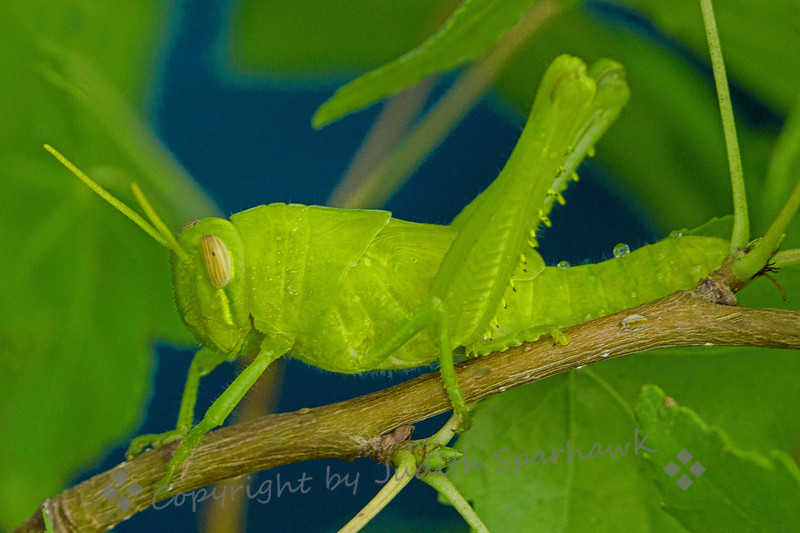 Green on Green - Judith Sparhawk
