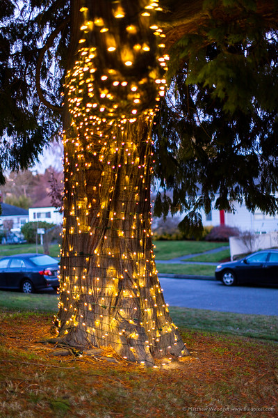 Woodget-140104-004--Christmas, fairy light, Pacific Northwest - United States of America, Tree.jpg