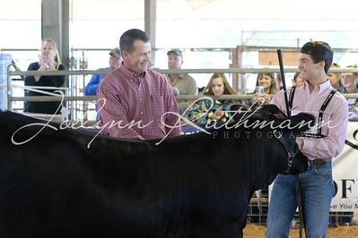 Commercial Heifer Show