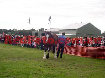 2010 Show Horse
