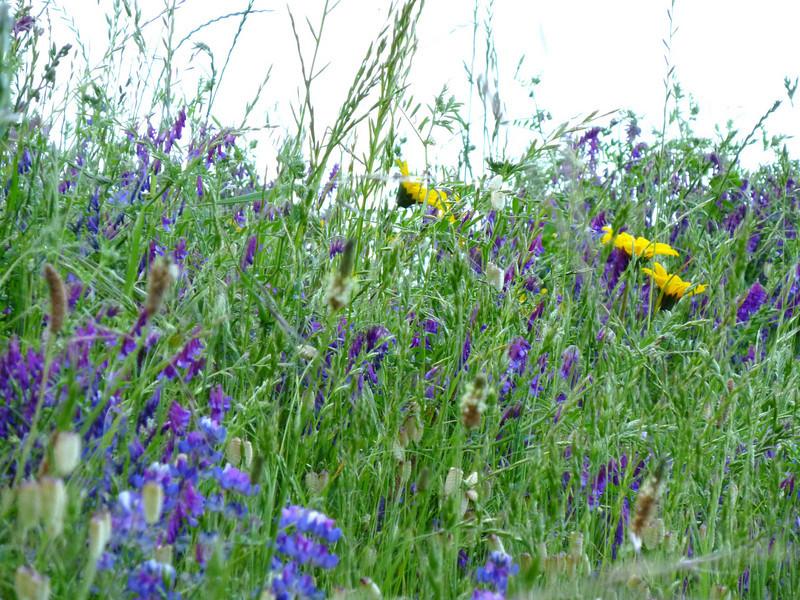 Widflowers.JPG