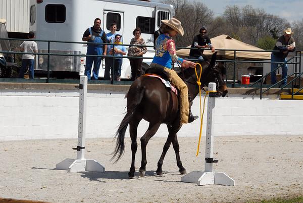 2013 Riding Mule Show