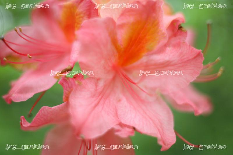 20090524_Ramble013.JPG