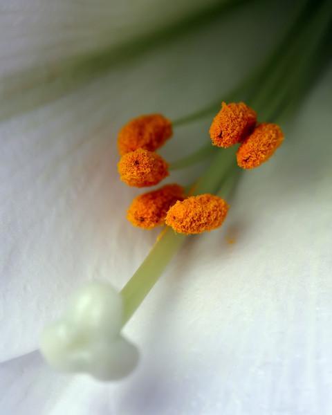 Flower - 03.JPG