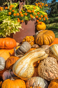 Close up view of a large gourd and several pumpkins