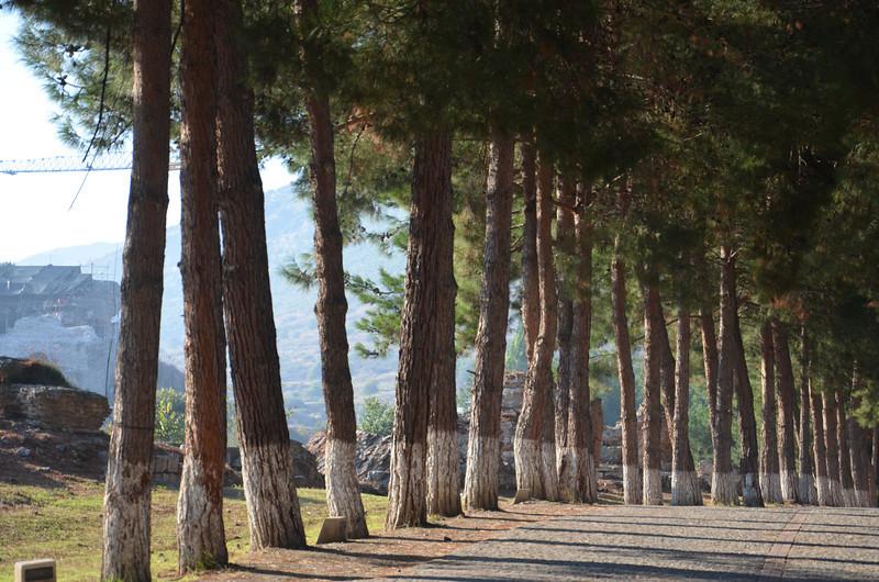 DSC_1730-trees.JPG