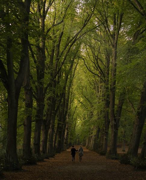 Walking in the wood