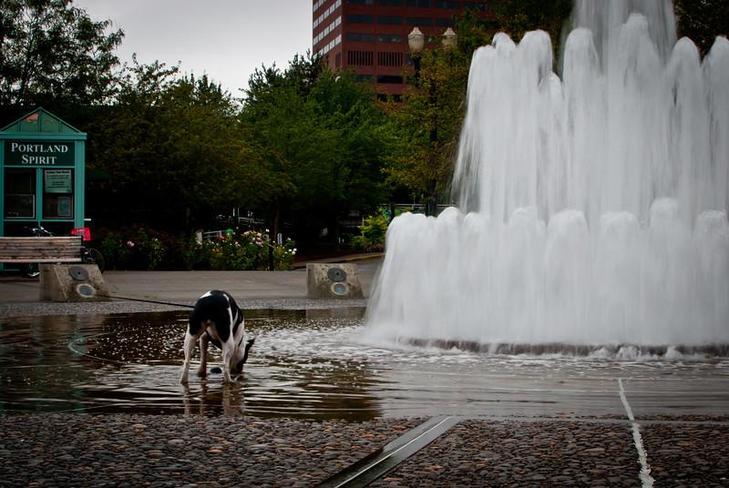 Portland 201208 Downtown (14).jpg