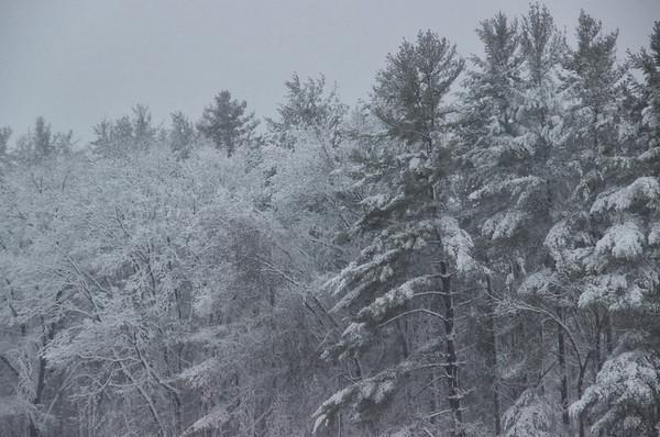 Snow? Spring?
