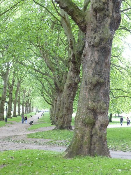 Edinburgh_2013--1338.JPG