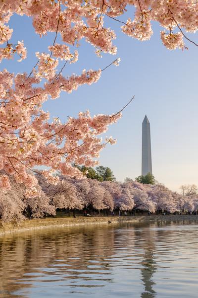 20180408 DC Cherry Blossoms 056-Enhanced.jpg