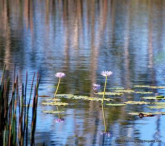 Galiwinku swamp - April 2008