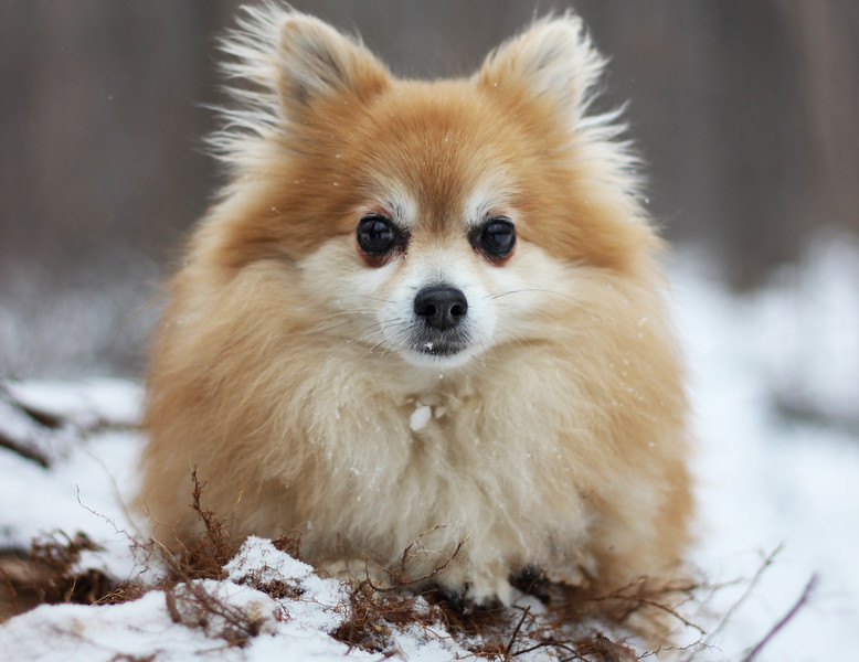 dog-winter2.jpg