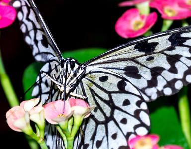 Florida's Butterflies