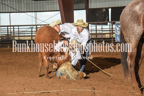 WILD COW MILKING
