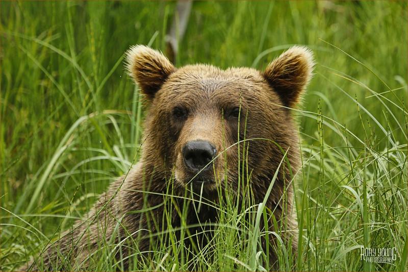 BearF.jpg