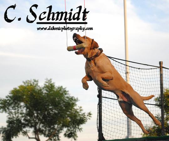 Shasta Splash Dogs Summer Jump September 15th & 16th