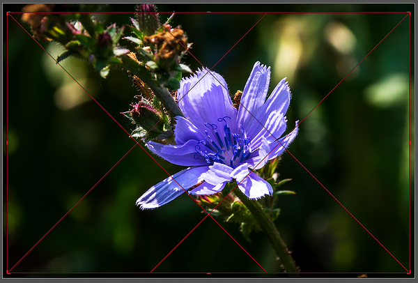 """Crop and Straighten Tool with the Crop Overlay Setting """"Diagonal"""" for a rectangular crop  Customizing the Grid Overlay"""