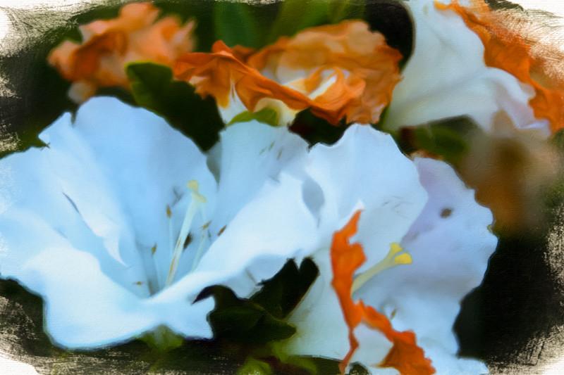 October 25 - Flowers.jpg