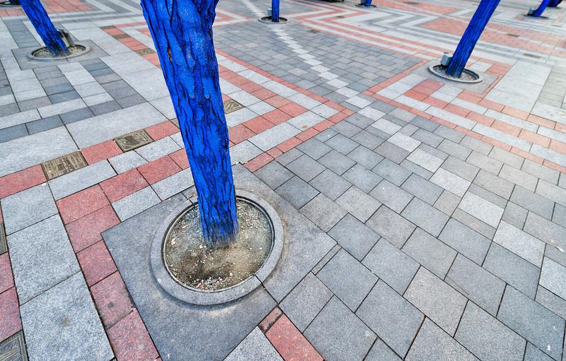 Blue Trees, Seattle - Washington