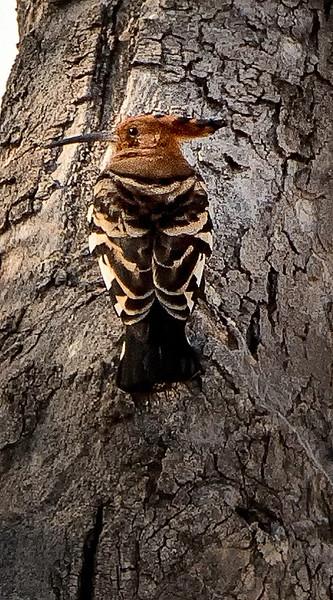 2014-08Aug-Okavango Masters-22-Edit.jpg
