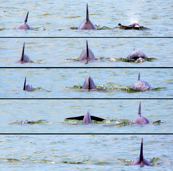 Three Dophins surface, then dive, in this series.