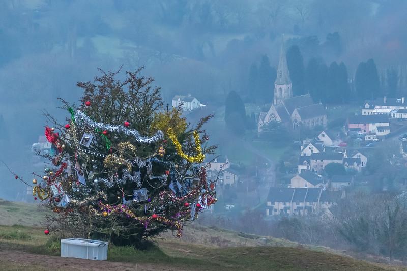 Dog's Christmas Tree-7601.jpg
