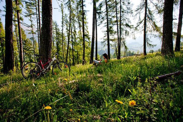 Wald + Wiese