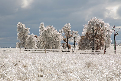 Ice Storm, January 2007