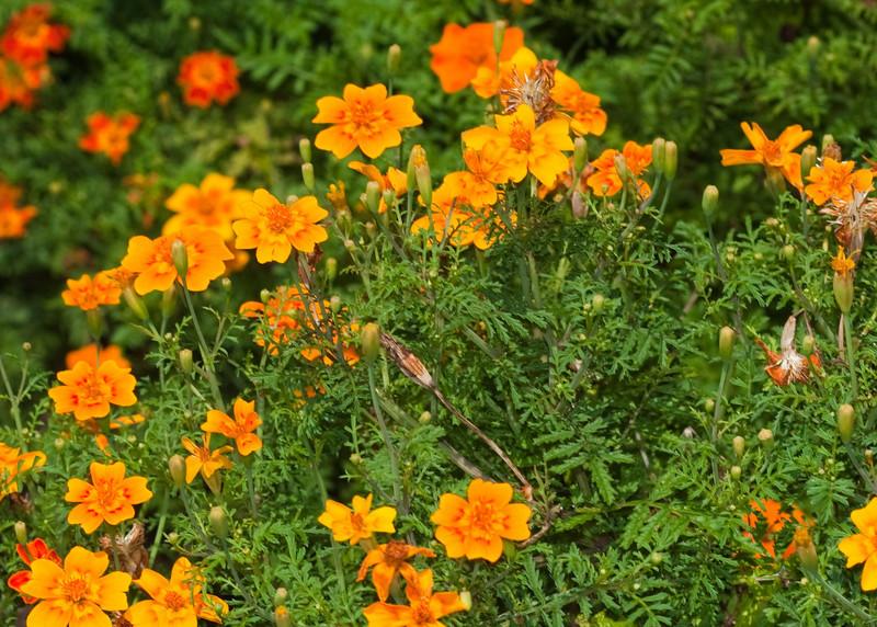 2009 06 30_NY Botanical Gardens_0770_edited-1.jpg