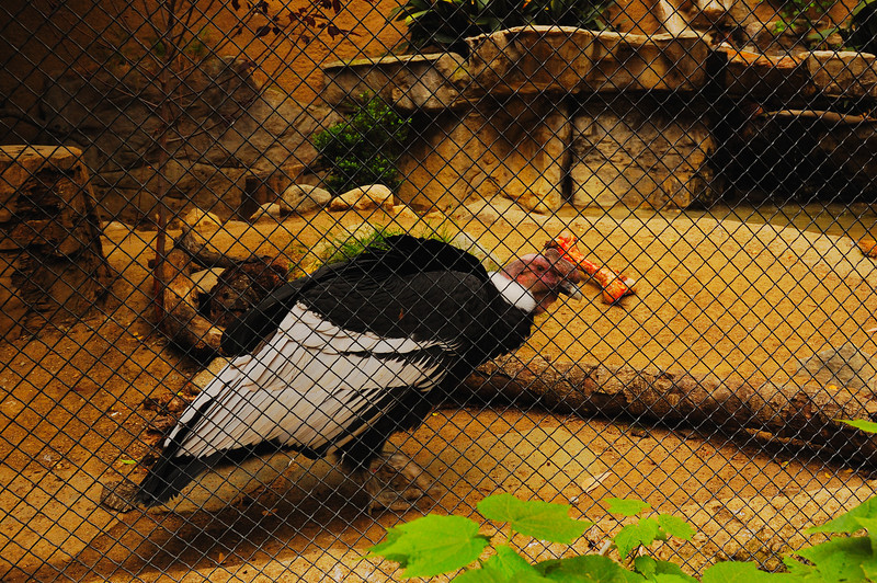 Los Angeles Zoo_11