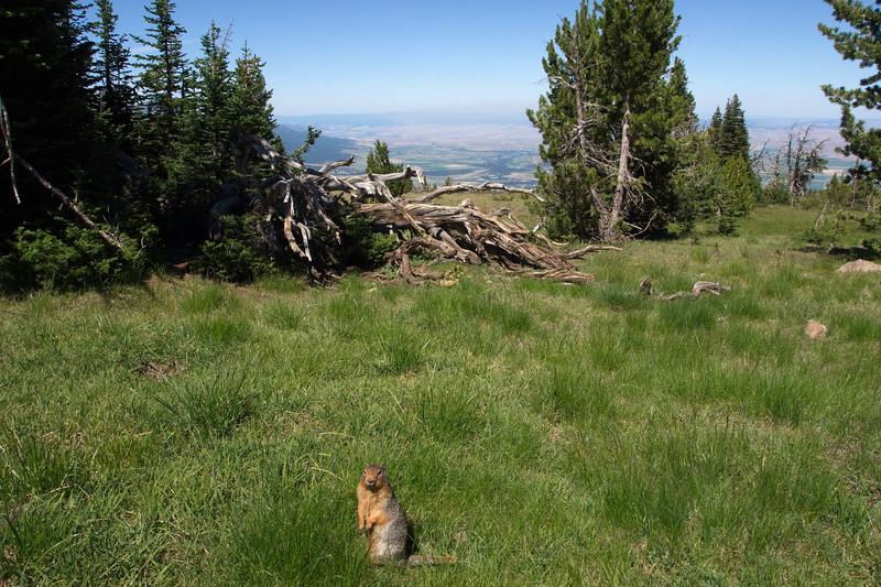 Mt Howard, Oregon, Pocket Gopher