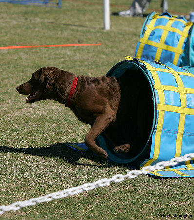 Scottsdale 2007/Agility Fun For Koko