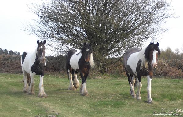 Horses - Set 6