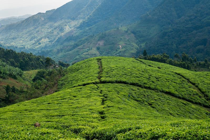 Nyugwe-Rwanda-17.jpg