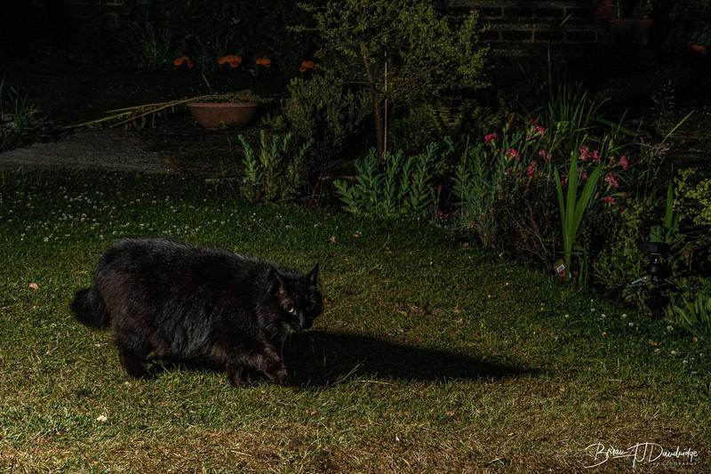 Garden Night Shoot-7365.jpg