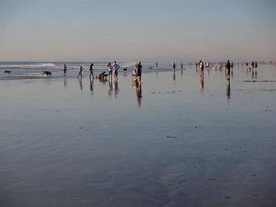 Pups at Beach 11-26-2011