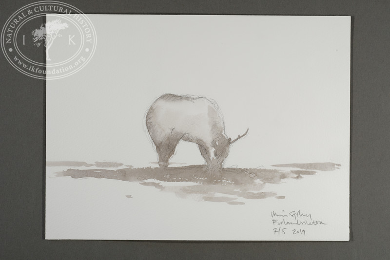 """Grazing reindeer seen from the site of the Field Station, Prins Karls Forland 
